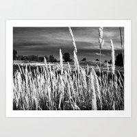 Long Grass Art Print