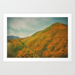 California Poppies 024 Art Print