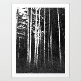 Birch Lines Art Print