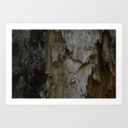 Kings Canyon Tree no.3 Art Print