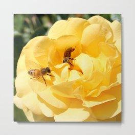 Peek a Boo Yellow Roses and Bees Digital Photo Metal Print