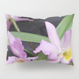 Cattleya Horace Maxima Orchid Pillow Sham