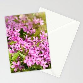 Phlox subulata pink flowering Stationery Cards