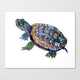 Slider Baby Turtle artwork Canvas Print