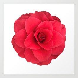 Red Camellia Bloom Art Print