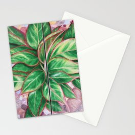 The Chinese Evergreen Stationery Cards