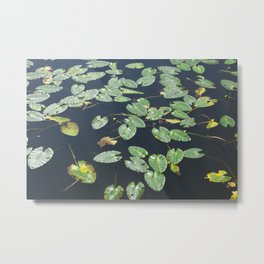 Leaves on water Metal Print