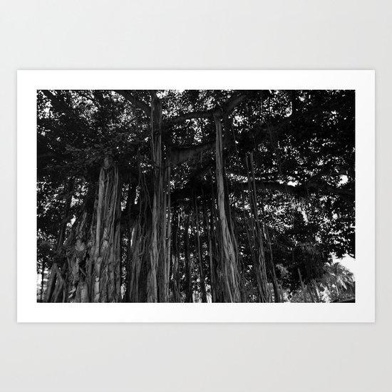 The Banyan Art Print