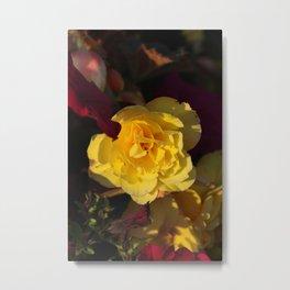 Yellow panache Metal Print
