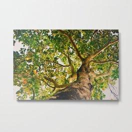 summer tropical tree foliage bottom view Metal Print