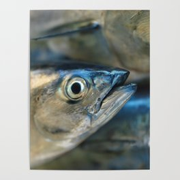 Big eye, tuna, fish, still life, photo, fine art, print, nature, sea, fishing, detail, blue Poster