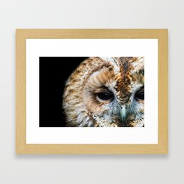 Portrait of a Tawny Owl Framed Art Print