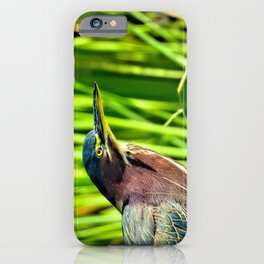 Green Heron Stare iPhone Case