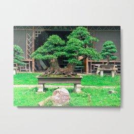 Bonsai Metal Print