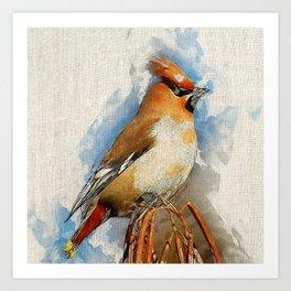 Watercolor Bird - Bohemian waxwing(Bombycilla garrulus) Art Print