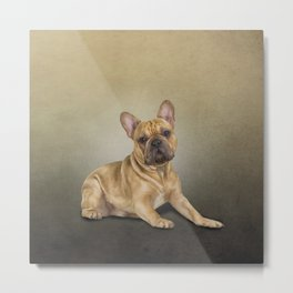 Drawing dog French Bulldog Metal Print