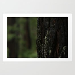 Redwood Tree Art Print