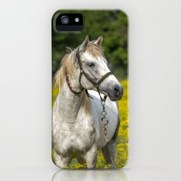 Gray Horse in a Field of Yellow Mustard iPhone Case