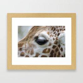 Eye of giraffe Framed Art Print