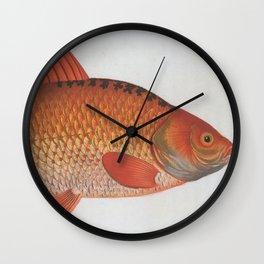 Vintage Illustration of a Goldfish (1785) Wall Clock