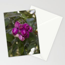 blackberry love Stationery Cards