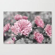 Blushing Gray Canvas Print