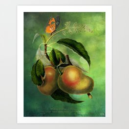 Bombay Mangos with Butterfly, Vintage Botanical Illustration Collage Art Art Print