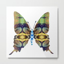 PhotoSynthesis/Butterfly1030089 Metal Print