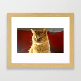 The Most Beautiful Cat in the World Framed Art Print