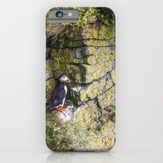 Eye Spy a Puffin Slim Case iPhone 6s