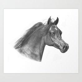 Horse graphite drawing Art Print
