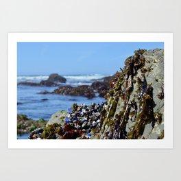 seaweed and glass Art Print