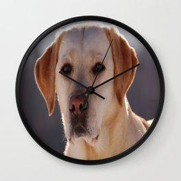 Portrait of A Golden Labrador Retriever Wall Clock