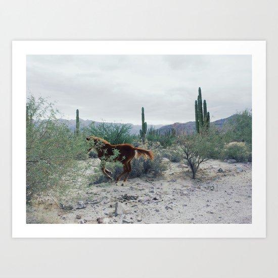Mexican Horse Hide Art Print