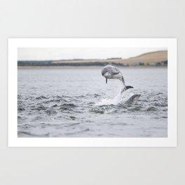 Wild bottlenose dolphin tursiops truncatus Art Print