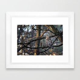 Hawkeyed Framed Art Print