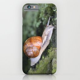 Snail 1 iPhone Case