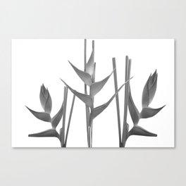 Three Heliconia black white Design Canvas Print
