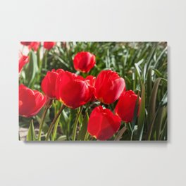 Red Tulips Photography Print Metal Print