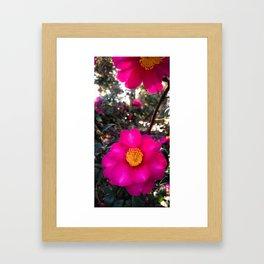 LA Pink Garden Flower Framed Art Print