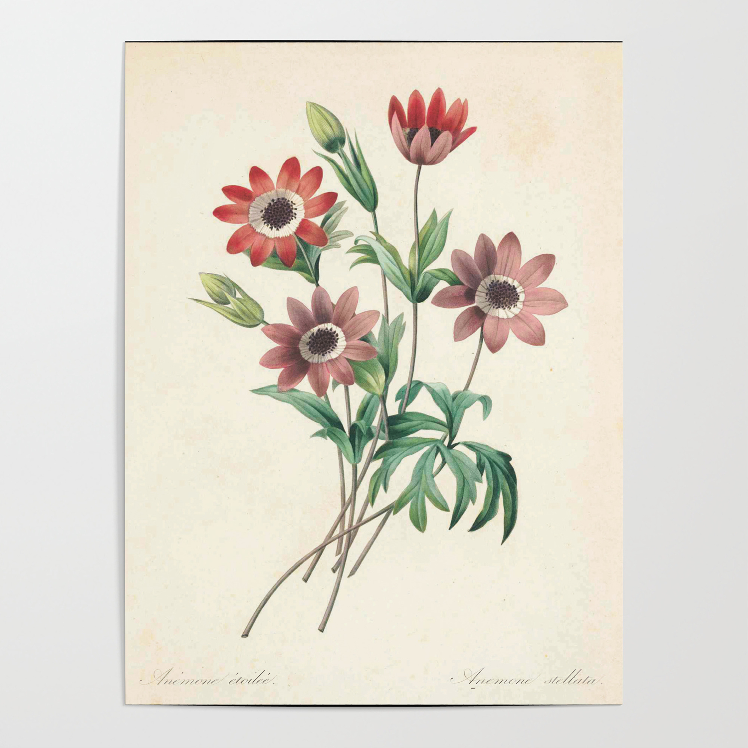 Daisy flower color pencil hand drawing poster by theyoungdesigns