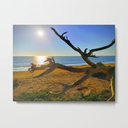 Sun is shinning and the old tree is rooted deep in the ground. Metal Print