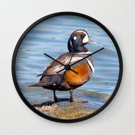 Beautiful Harlequin Duck on the Rocks Wall Clock