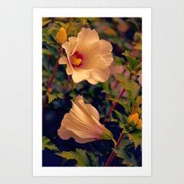 Rose of Cimmaron Art Print