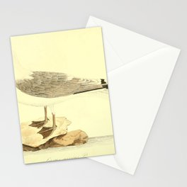larus niveus26 Stationery Cards