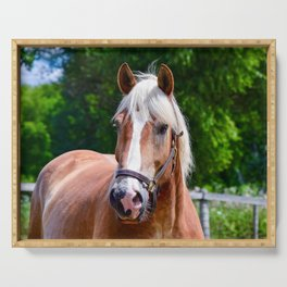 Equine Beauty Serving Tray