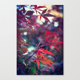Red is the warmest color - 1 Canvas Print