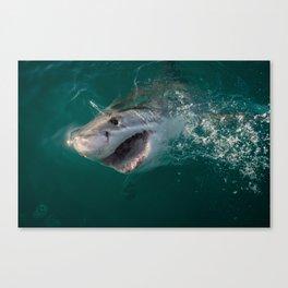 Shark Smile Canvas Print