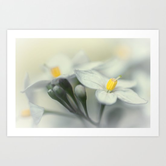 Fading flowers... Art Print