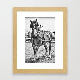 cart horse Framed Art Print